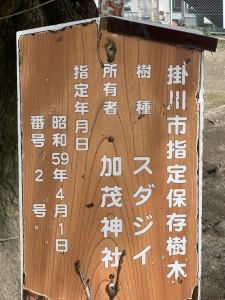 掛川市指定保存樹加茂神社スダジイ